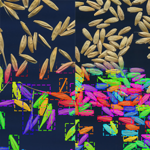 Training Instance Segmentation Neural Network with Synthetic Datasets for Crop Seed Phenotyping