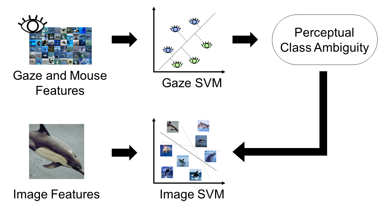 Gaze-guided Image Classification for Reflecting Perceptual Class Ambiguity